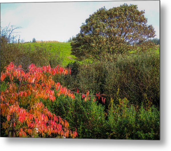 Irish Autumn Countryside Metal Print