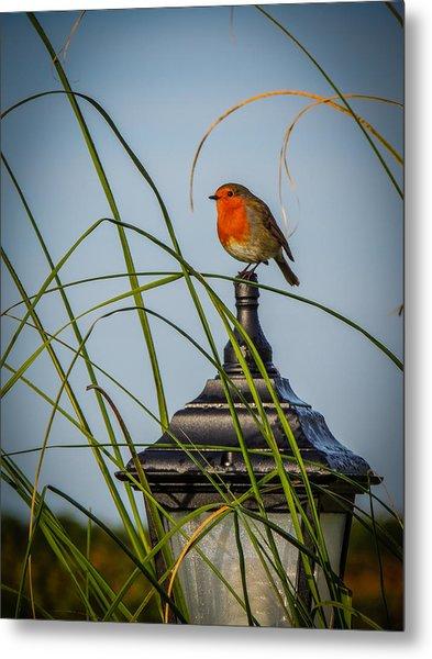 Irish Robin Perched On Garden Lamp Metal Print
