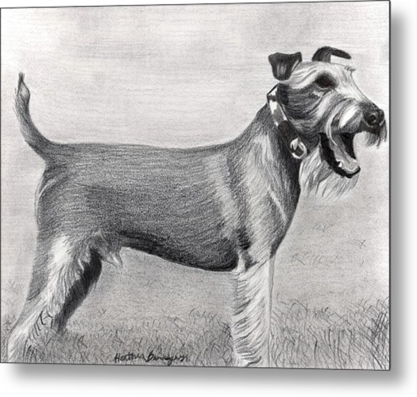 Irish Terrier Dog Portrait Metal Print by Olde Time  Mercantile