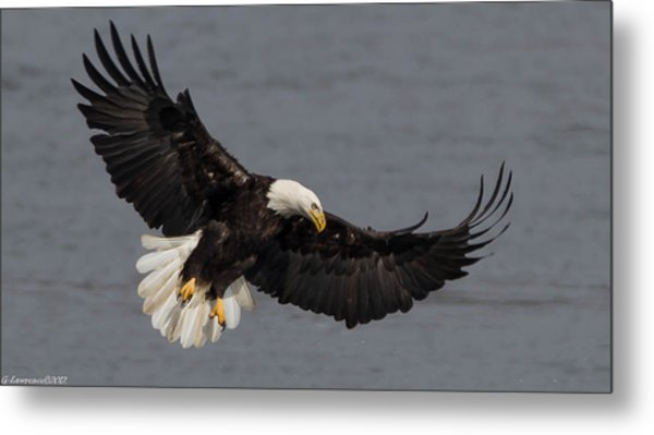 Iron Eagle  Metal Print by Glenn Lawrence