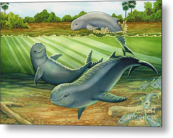 Irrawaddy Or Mekong River Dolphin Metal Print by Tammy Yee
