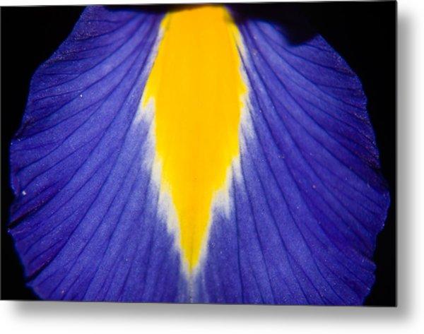 Irresistible Iris Metal Print