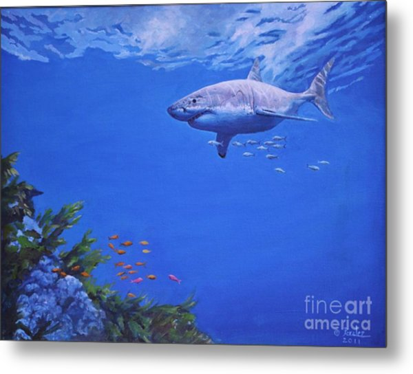 Great White Shark Metal Print