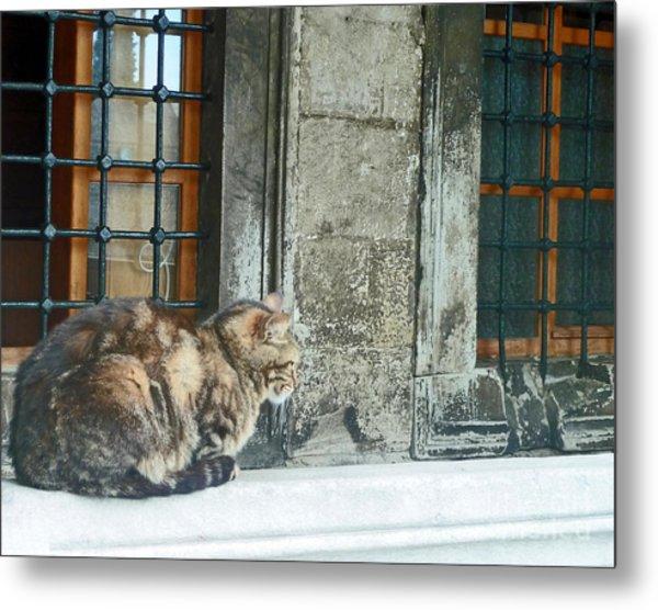 Istanbul Cat Metal Print