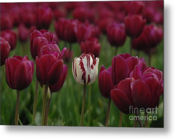 It Is Beautiful Being Different Metal Print