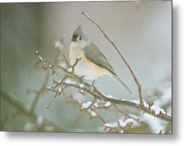 It May Be Cold But I Still Have My Looks Metal Print