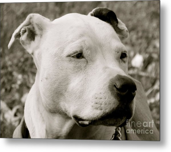 Its A Beautiful Day Metal Print by Q's House of Art ArtandFinePhotography