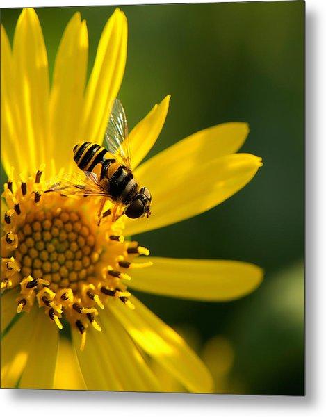 Its A Bees Life IIi Metal Print by Kathi Isserman