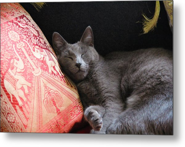 its a cats Life Metal Print by Debbie Cundy