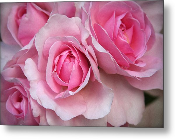 It's Bloomin' Pink Metal Print by CarolLMiller Photography