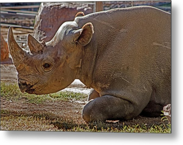 Its My Horn Not Your Medicine Metal Print