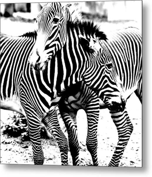 I've Got Stripes Metal Print