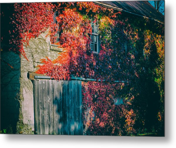 Ivy Covered Barn Metal Print