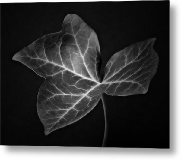 Black And White Flowers Macro Photography Art Work Metal Print