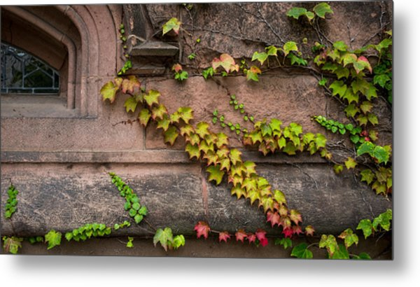 Ivy League Metal Print