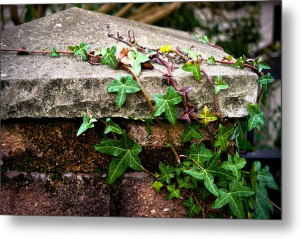 Ivy On Stone Metal Print
