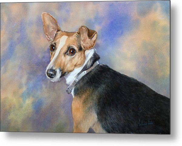 Jack Russell Metal Print by Anthony Forster