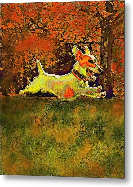 Jack Russell In Autumn Metal Print