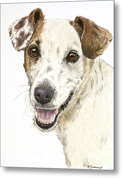 Jack Russell Terrier Portrait Metal Print