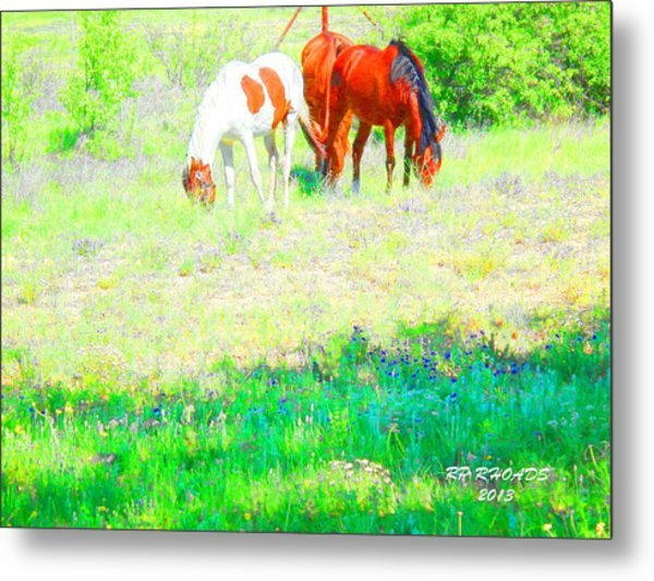 Jack Smokey And Camelot Texas Spring A Metal Print