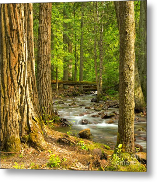 Jackson Creek Metal Print