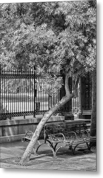 Jackson Square Bench And Tree Metal Print