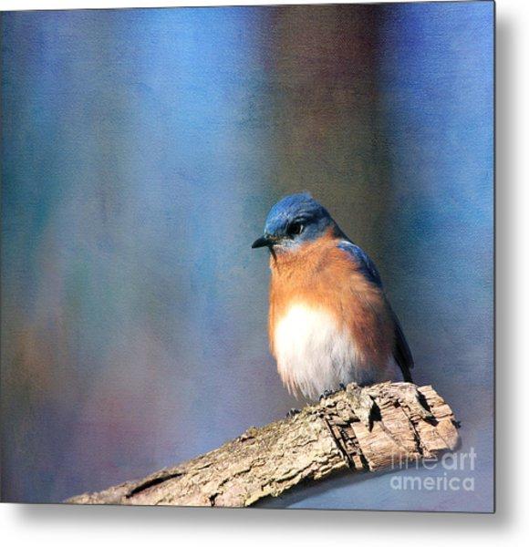January Bluebird Metal Print
