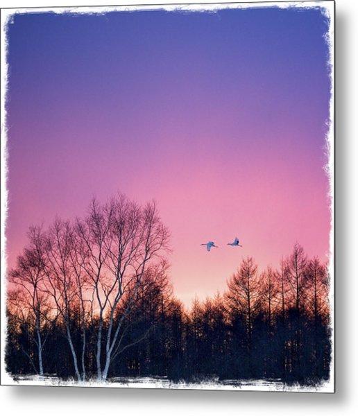 Japanese Cranes Flying To Roost Hokkaido Japan Metal Print