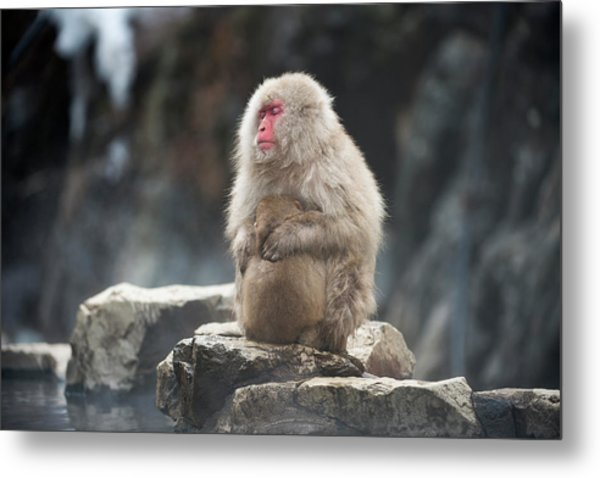 Japanese Macaque With Young Metal Print by Dr P. Marazzi
