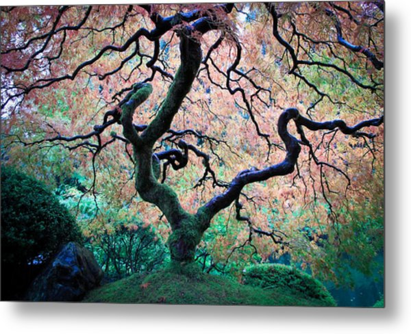 Japanese Maple In Autumn Metal Print