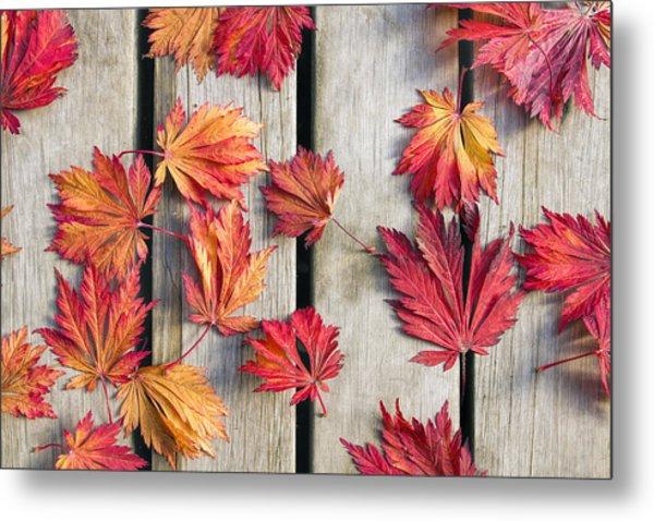 Japanese Maple Tree Leaves On Wood Deck Metal Print