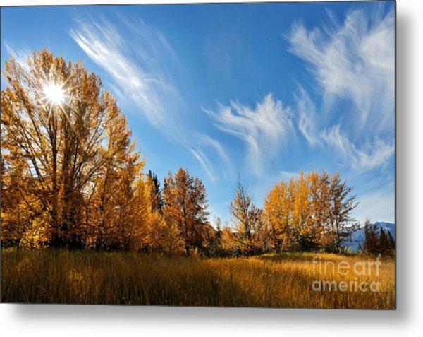 Jasper - Autumn Sky Chief Metal Print
