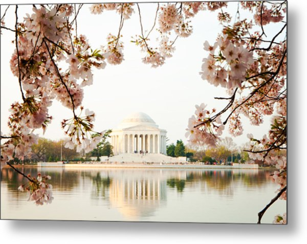 Jefferson Memorial With Reflection And Cherry Blossoms Metal Print