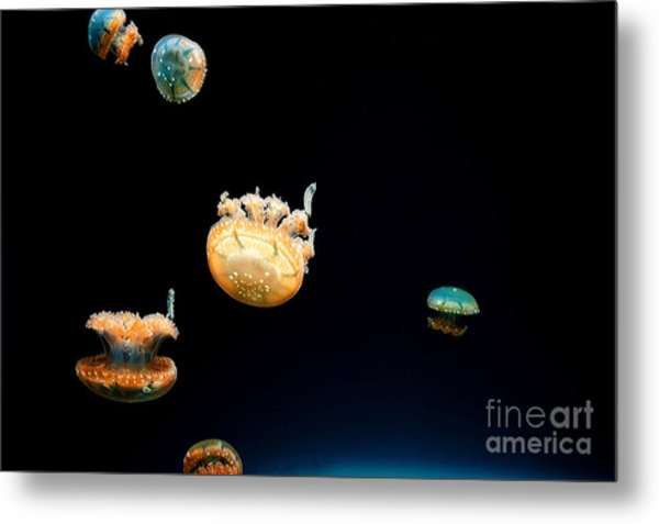 Jellies Metal Print