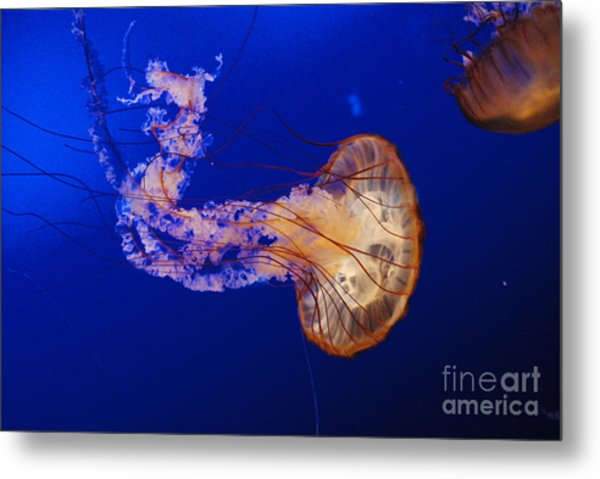 Jelly Fish 1 Metal Print