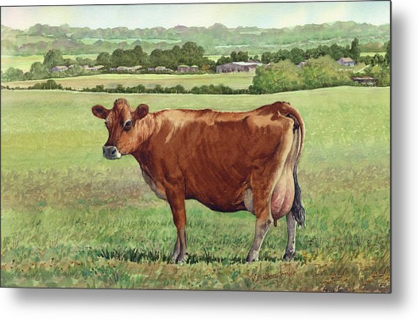 Jersey Cow Metal Print by Anthony Forster