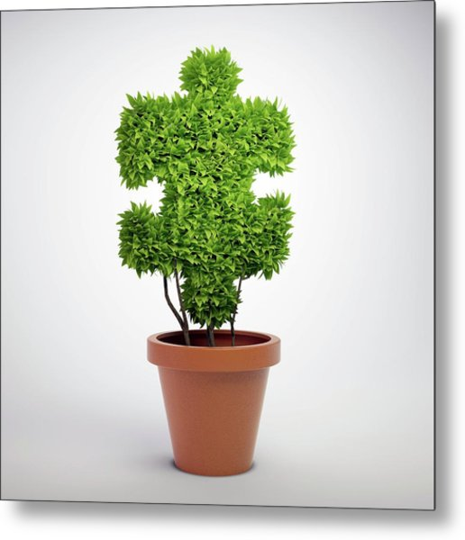Jigsaw Plant Metal Print by Andrzej Wojcicki/science Photo Library