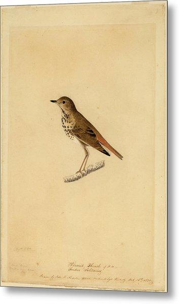 John James Audubon, Hermit Thrush, American Metal Print