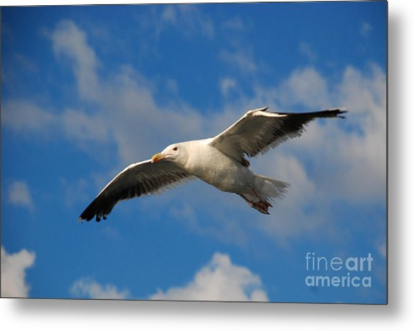 Jonathan Livingston Metal Print