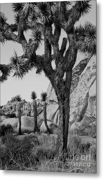 Joshua-tree Babies Metal Print by Mae Wertz