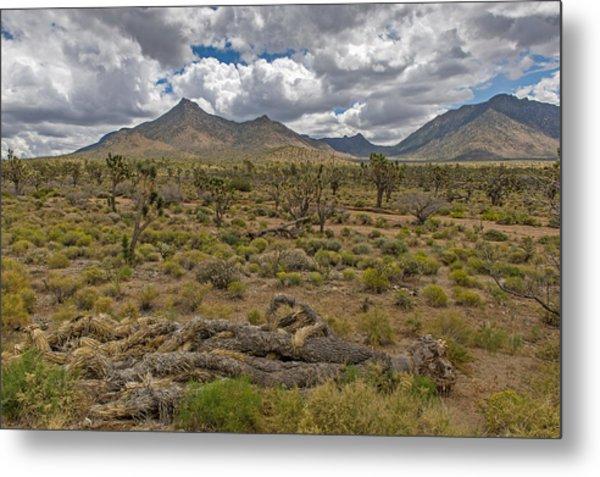 Joshua Tree Forest In Arizona Metal Print by Willie Harper