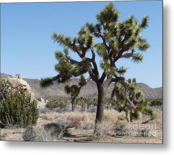 Joshua Tree National Park 6 Metal Print by Deborah Smolinske