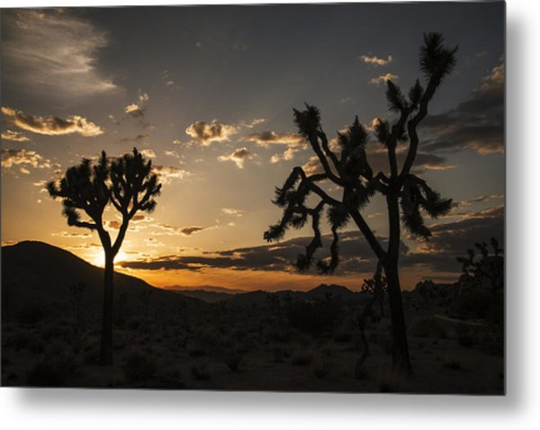 Joshua Tree Sunset Silhouette 2 Metal Print
