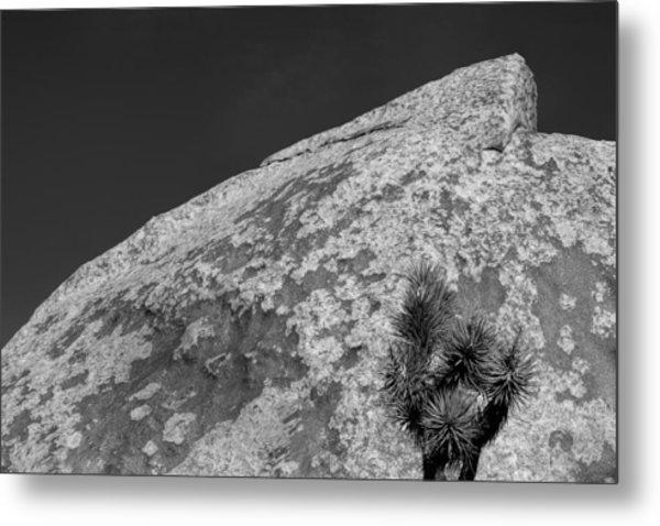 Joshua Tree Textures Metal Print