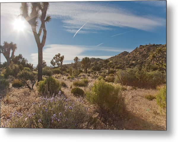 Joshua Tree Using A Tripod Metal Print