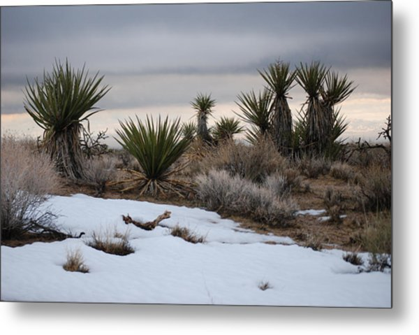 Joshua Trees And Snow Metal Print by Pamela Schreckengost