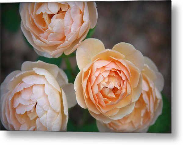 Jude The Obscure Metal Print by CarolLMiller Photography