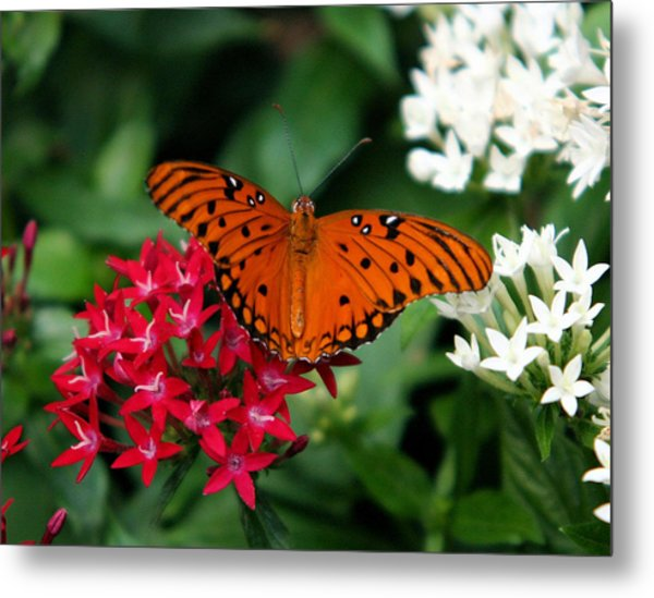 Julia Butterfly Metal Print