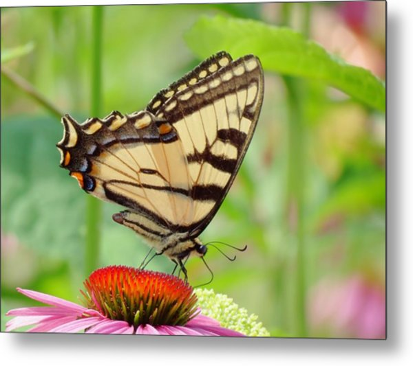 July Swallowtail Metal Print