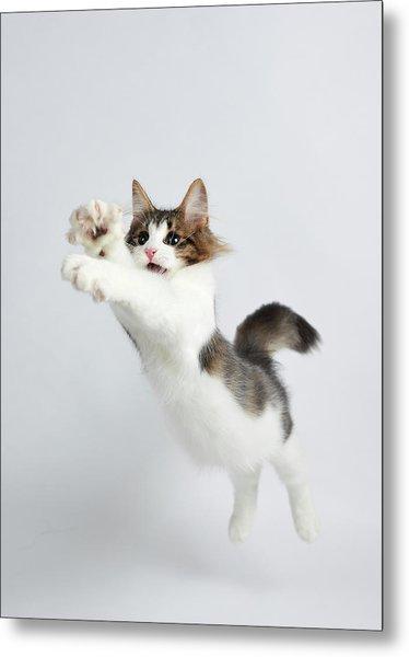 Jumping Kitten Metal Print by Ryuichi Miyazaki